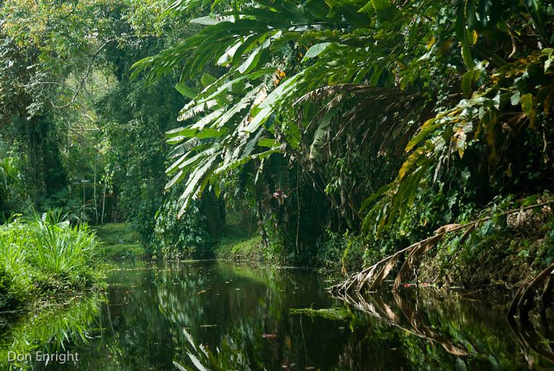 The Costa Rica Sloth Sanctuary, on the Estrella River