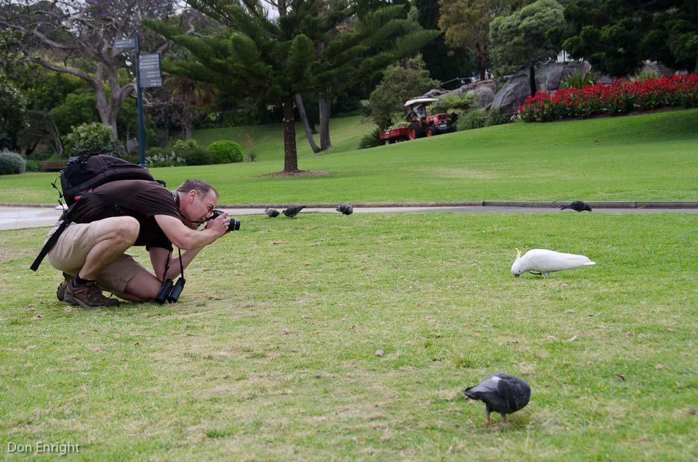 tom photographing cockatoos