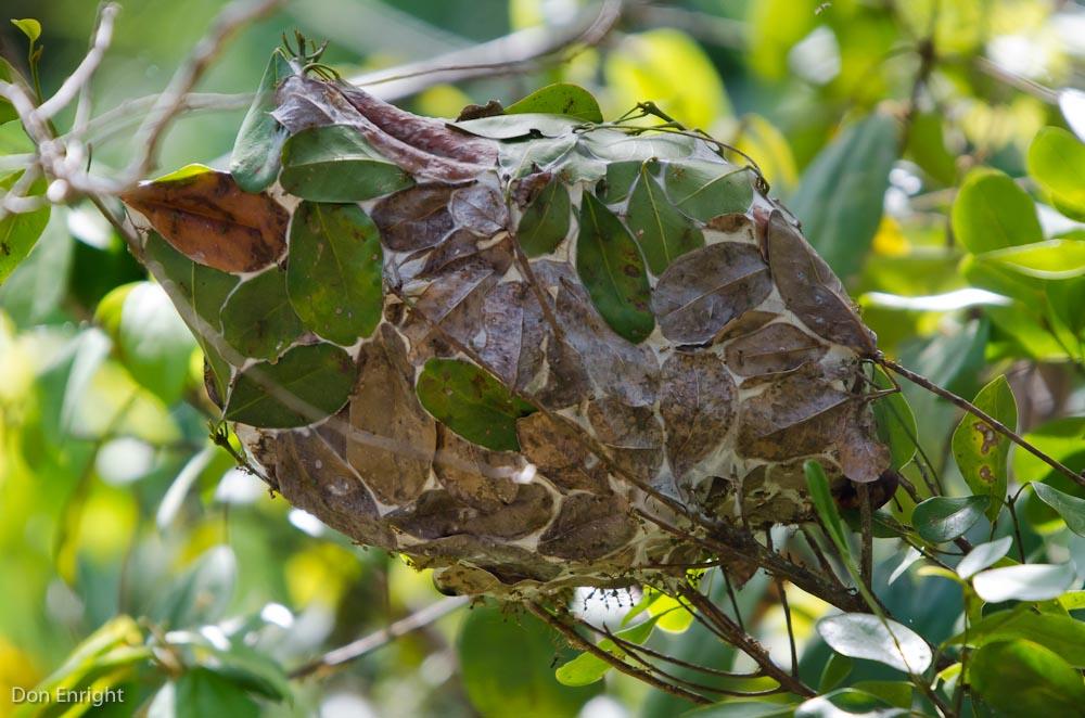 green ant nest