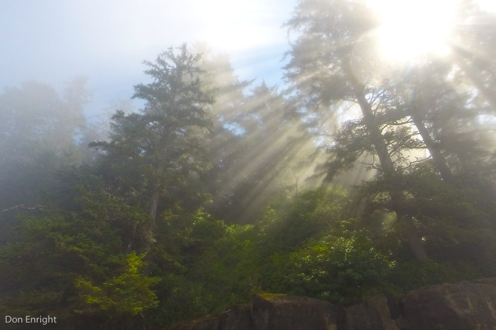 sunlight, west coast trail