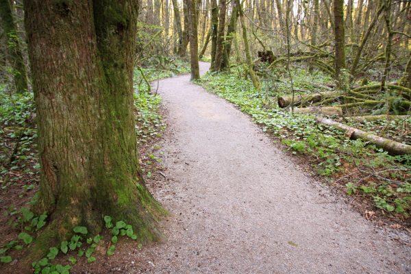 Path to Surrey Nature Centre