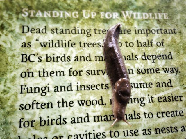 Slug crawling down wildlife sign