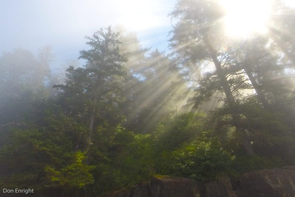 sunlight, west coast trail